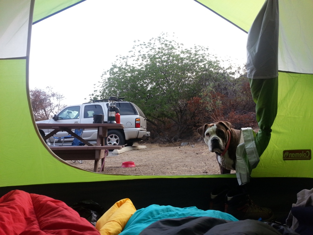 Agnes Loves Camping