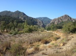 Malibu Creek State Park: a good backup if beach-side campsites are taken. The creek, I hear, is worth visiting, but you can't bring dogs on any of the park trails so that's unfortunate for dog owners. We heard coyotes running through camp here one night. Spooky!