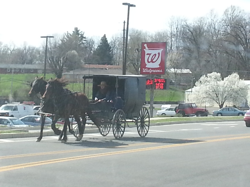 Amish horse carriage, Kentucky